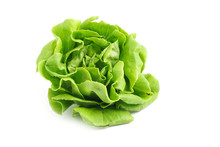 Organic Hydroponics Vegetable For Salad Buttter Head Leaf Isolated On White Background