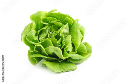 Obraz Organic Hydroponics Vegetable for salad Buttter Head Leaf isolated on white background - fototapety do salonu