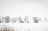 Krajobraz jeziora w zimie - 264250430