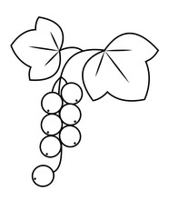 Currant, Cute Medicinal Plant. Healthy Berry For Health And Medicine. Graphic Image. Vector Illustration.