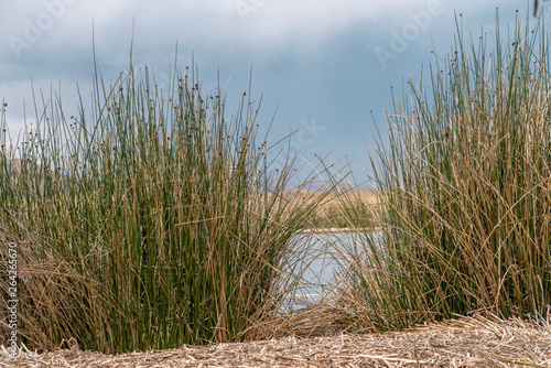 floating islands cane