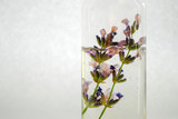 Lavender oil with flowers, isolated on white. Close up with text space