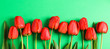 Leinwandbild Motiv Many beautiful red tulips with green leaves on color background, space for text