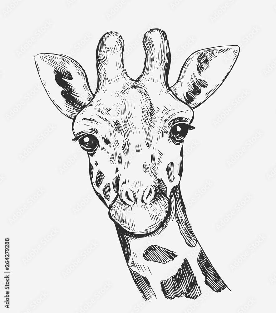 Fototapeta Giraffe sketch. Hand drawn illustration converted to vector