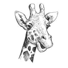 Giraffe Sketch. Hand Drawn Ill...