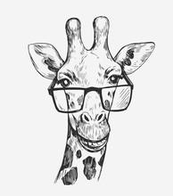 Giraffe Sketch. Hand Drawn Illustration Converted To Vector