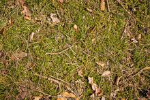 Background With Forest Mulch With Moss And Dry Twigs