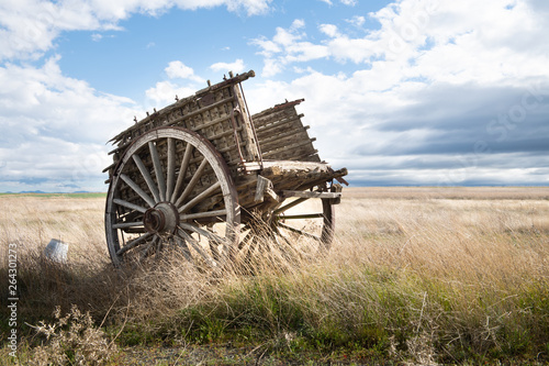 Photo  Ox cart in the field with sunset light.