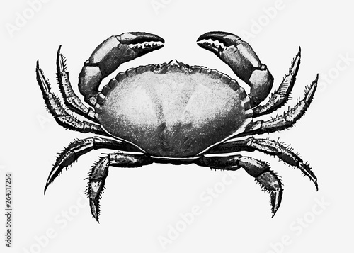 Vintage crab illustration Wallpaper Mural