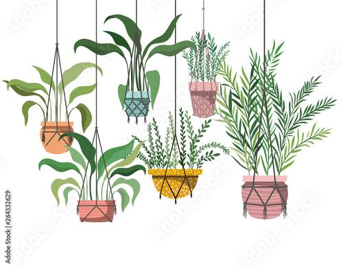 Foto op Canvas Vogels in kooien houseplants on macrame hangers icon