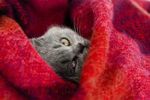 Gray Kitten Sleeps In A Bright...