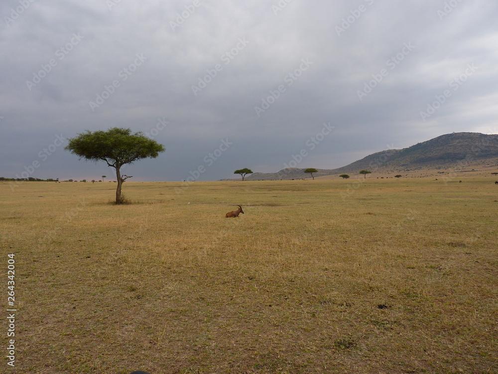 Maasai Mara, Kenia, safari
