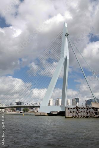 Foto auf Acrylglas Schwan Rotterdam City Netherlands Bridge river Maas