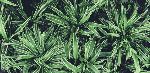 Foto auf Leinwand Olivgrun Green leaves plant pattern for background, fresh spring beautiful nature as vivid color leaf and wallpaper .Environment