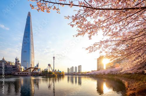 Photo sur Aluminium Seoul Morning sunrise in cherry blossom park