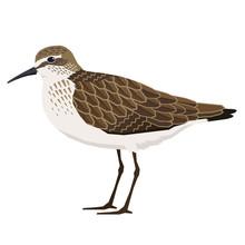 Birds Collection Sandpiper Vec...