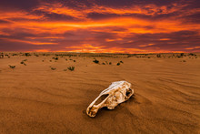 Skull Of An Animal In The Sand...