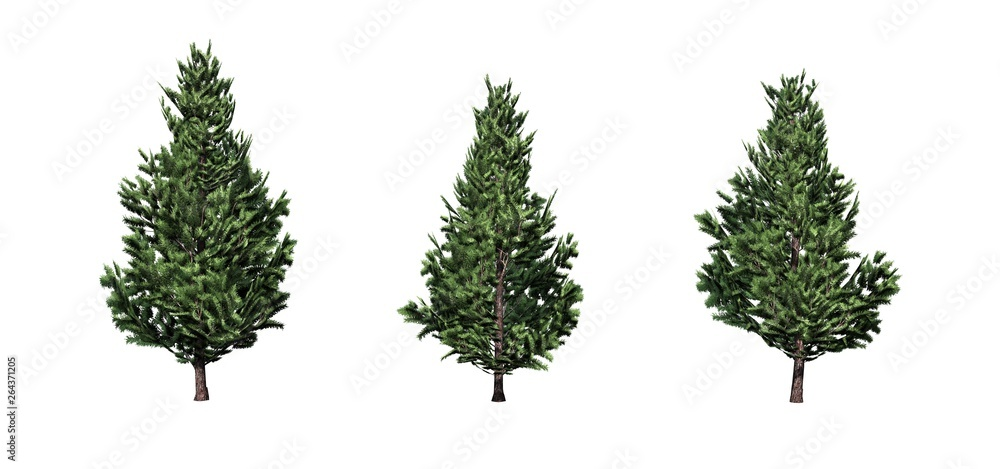 Fototapety, obrazy: Set of Christmas Scotch Pine trees - isolated on a white background