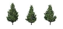Set Of Christmas Scotch Pine T...