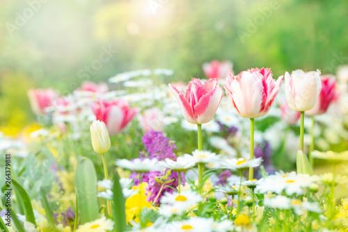 Valokuva 春の花 花壇