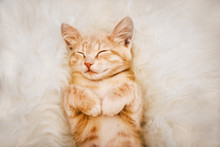 Cute, Ginger Kitten Is Sleeping And Smiling On A Fur Blanket. Concept Cozy Hyugge And Good Morning.