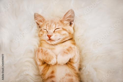 Fotografie, Obraz Cute, Ginger kitten is sleeping and smiling on a fur blanket