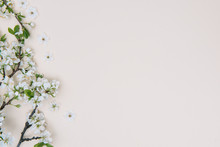 Photo Of Spring White Cherry Blossom Tree On Pastel Background. View From Above, Flat Lay, Copy Space. Spring And Summer Background.