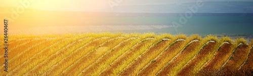 Montage in der Fensternische Honig Hilly spring landscape of gardens and endless fields. Moldova.