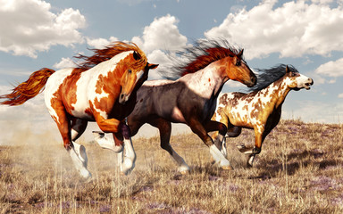 Three mustangs race across the grassy plains of the American West. These three wild paint horses kick up dust as they gallop freely across the prairie with the wind in their manes. 3D Rendering
