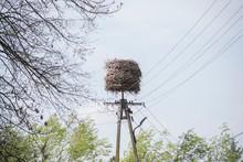 Stork Nest On A Electricity Pole