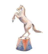 Watercolor Circus Horse Illustration. Hand Painted Trained Animal Isolated On White Background.