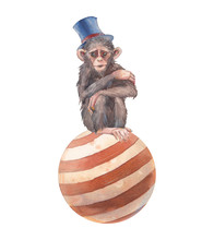 Watercolor Circus Monkey Illustration. Hand Painted Chimpanzee On Ball Isolated On White Background.