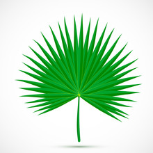 Palmetto Leaf Tropical Plant