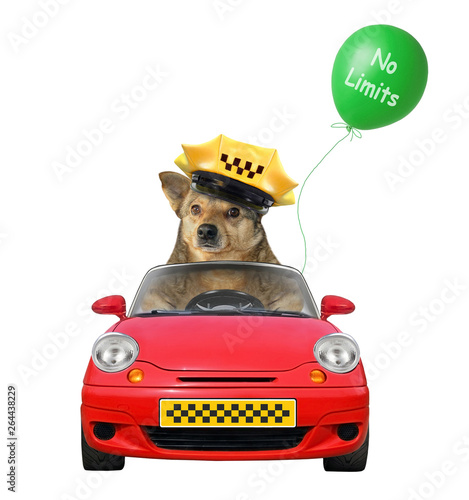 Photo The dog taxi driver in a cap is in a red car with a green balloon