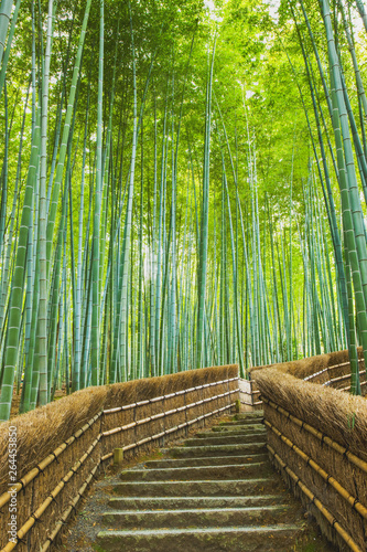 あだしの念仏寺の竹林