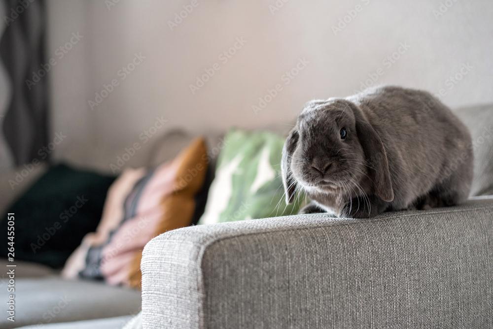 Fototapeta Cute little bunny on the sofa posing to the camera