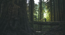 Sunlight Between Trees