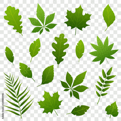 Obraz Summer green leaves of different trees isolated on transparent background. Fresh foliage. Simple leaves collection in flat style. Vector illustration. - fototapety do salonu
