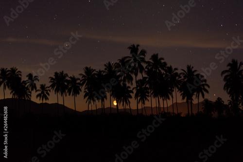 Poster Violet paisaje nocturno