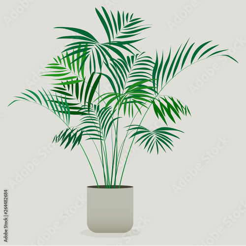 Illustration of green plant in a pot . Areca plant Canvas Print