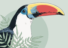 Coloured Toucan For Prints