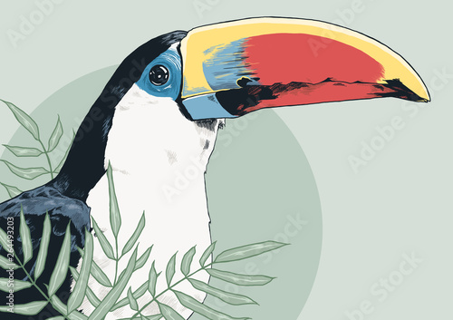Photo Coloured toucan for prints