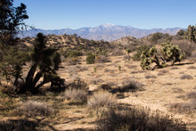 Joshua Tree National Park Desert Landscape - Southern California