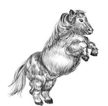 Pony Horse Hand Drawn Illustration,art Design