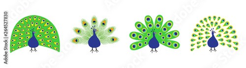 Peacock set line. Feather out open tail. Beautiful Exotic tropical bird. Zoo animal collection. Cute cartoon character. Decoration element. Flat design. White background. Isolated.