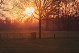 Meadow with tree and fence with wooden passage during sunset. - 264545446