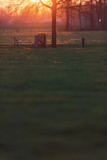 Meadow with tree and fence with wooden passage during sunset. - 264545455