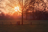 Meadow with tree and fence with wooden passage during sunset. - 264545457