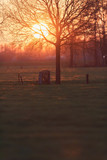 Meadow with tree and fence with wooden passage during sunset. - 264545458