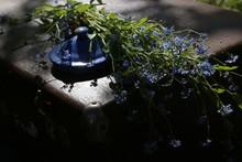 Myosótis Blue Flowers, Yellow...